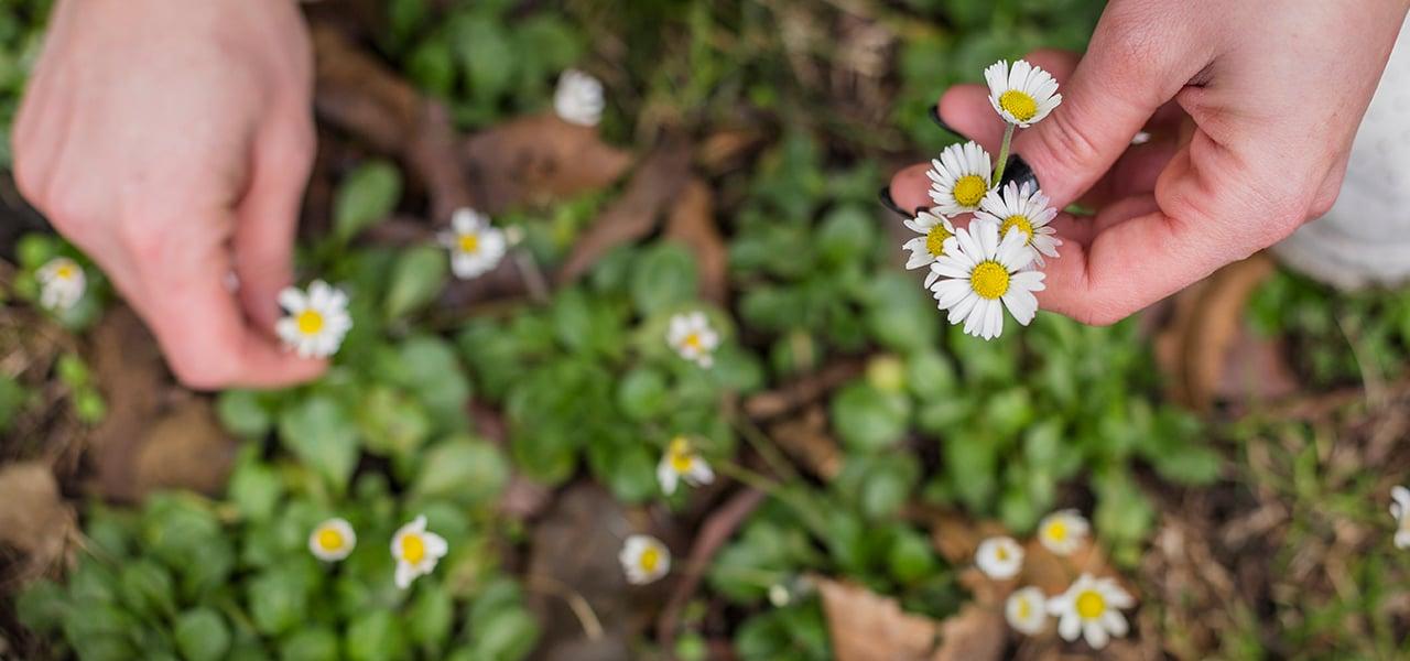 3. plantas y flores para cuidar tu piel