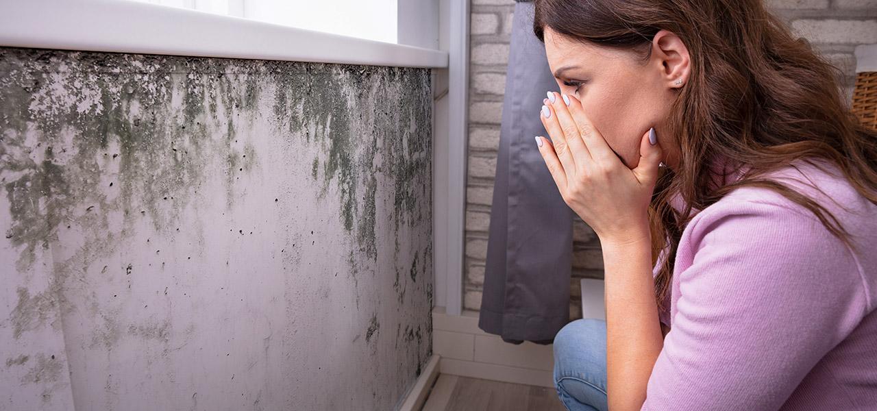 Moho en casa: Una amenaza silenciosa para tu salud